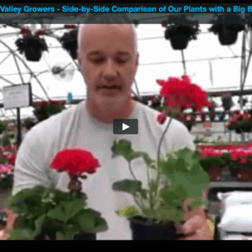 Side-by-Side Comparison Video of Our Plants with a Big Box Store