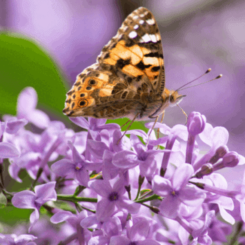 Plants That Attract Wildlife