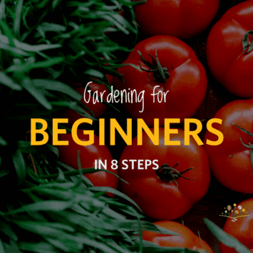 Gardening for Beginners in 8 Steps