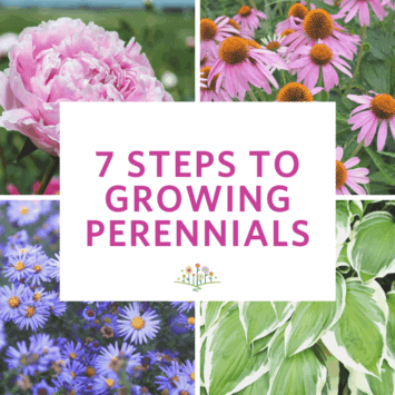 7 Steps to Growing Perennials