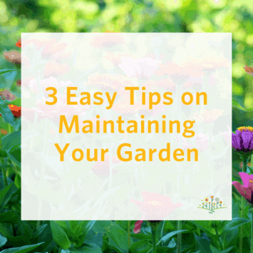 3 Easy Tips on Maintaining Your Garden