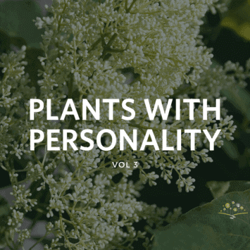 Plants with Personality: Vol 3