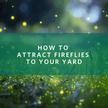 How to Attract Fireflies to Your Yard