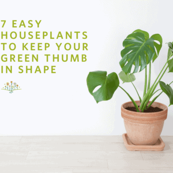 7 Easy Houseplants to Keep Your Green Thumb in Shape