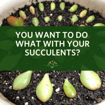 You Want to do What with Your Succulents?