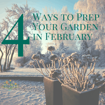 Four Ways to Prep Your Garden in February